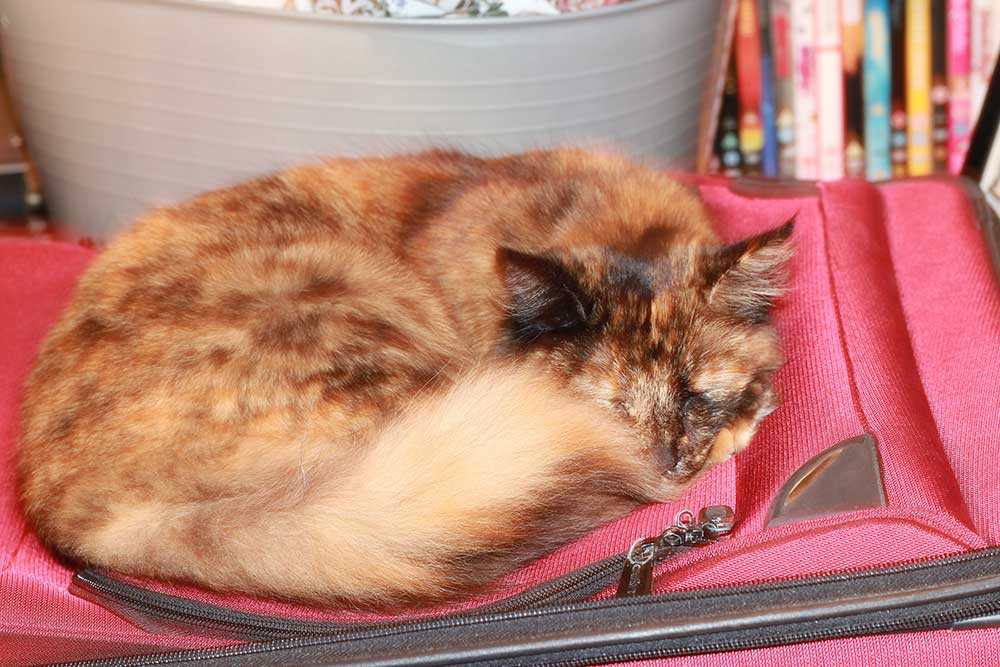 clover-suitcase