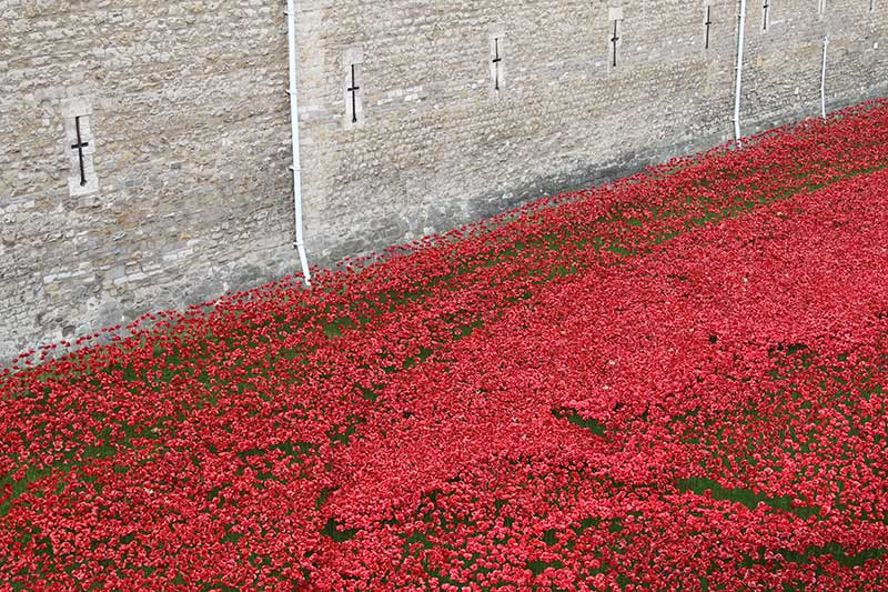 poppies-wall