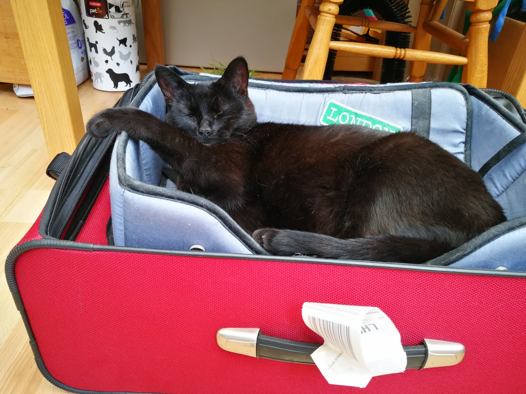 Luna snoozing in a suitcase with one paw up on the side | carlalouise.com