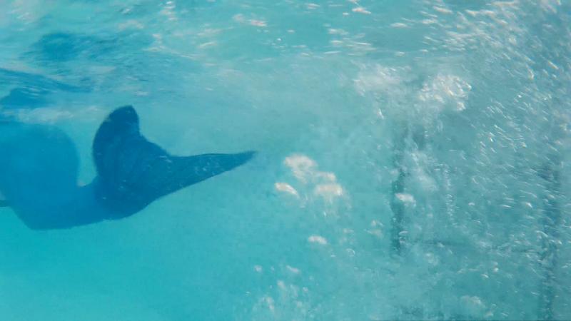 run-away-days-underwater-still