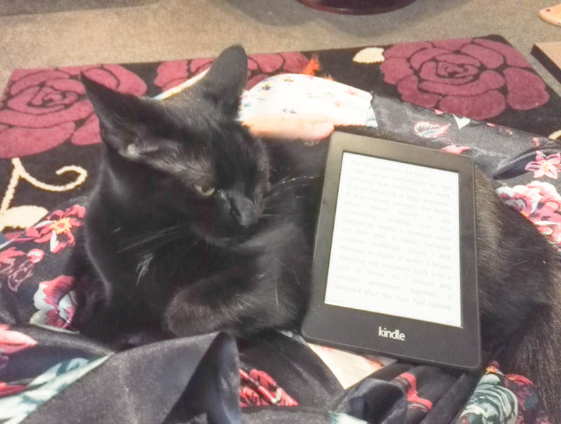Lunathe kindle holding cat