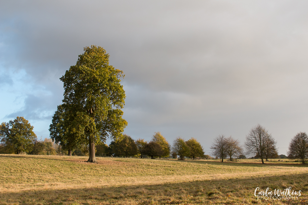 Pin Mill walk   Carla Watkins Photography   carlawatkinsphotography.com