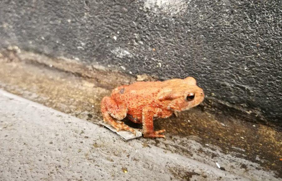 Teeny orangey frog | carlalouise.com